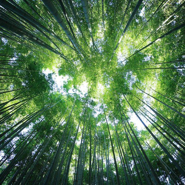 Miljö Hållbar IT